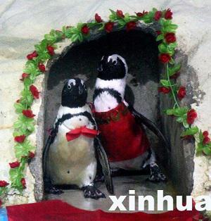 Gay penguins in China's Wuhan Zoo in wedding ceremony: image via shanghaiist.com