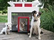 Bauhaus Dogs