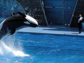 Opinions: Killer Whales Constitution