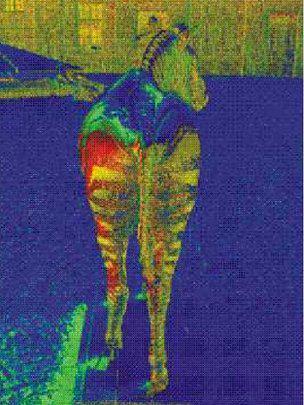 Light polarised off a zebra's coat (colors denote shading of light): image via BBC.co.uk/nature