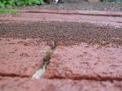 Tips Keep Ants Your House