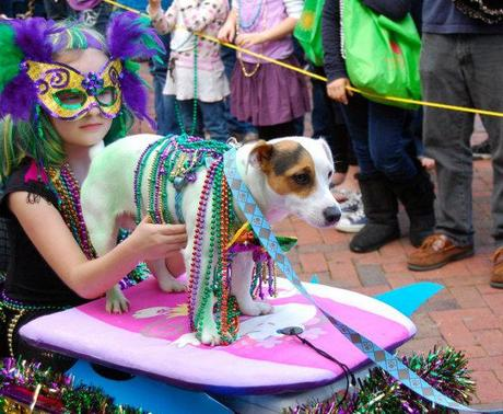 Surfer Dog in the Mardi Gras Parade: photo by Dennis Pillion for Al.com