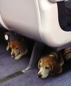 Seven Tips For Traveling With Fido