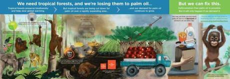 Infographic: Palm Oil and Tropical Deforestation