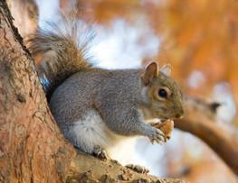 Save Hundreds of Thousands of Squirrels From Being Murdered