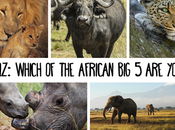 QUIZ: Which African You?