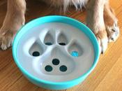 Rock Bowl Mealtime Dogs
