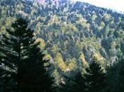 Forest Management Deforestation Impacting Climate