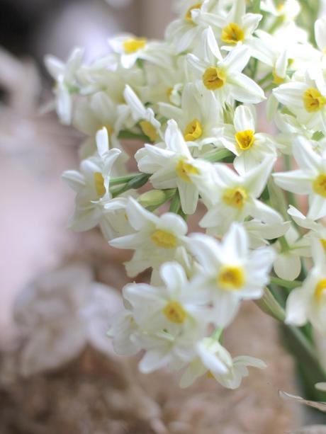 Monday Flowers – War & Peace