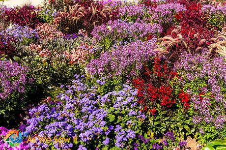 Flowers from the German flower festival.
