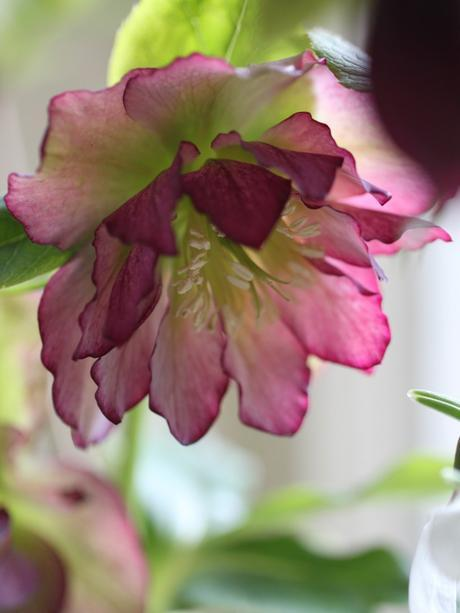 Monday Flowers – Winter Cheer