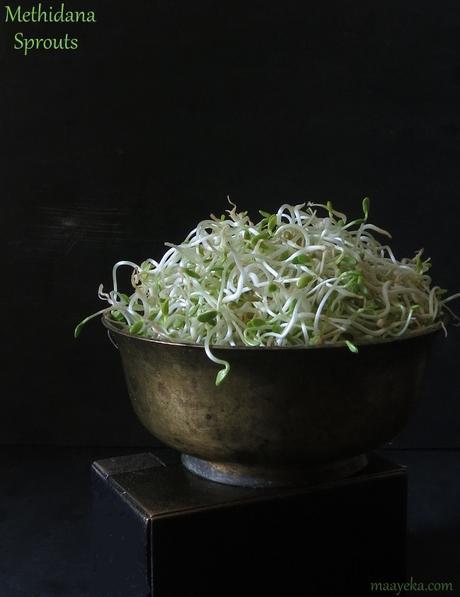 methi dana sprouts