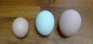 Signs of Spring, Chickens and Eggs