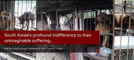 South Korea dog meat industry