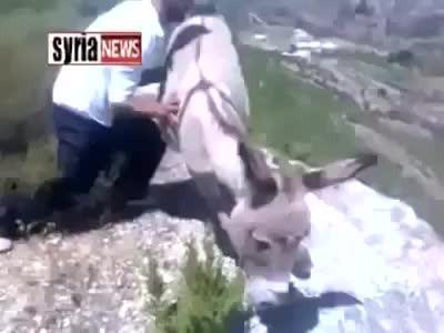Arab pushes donkey over cliff