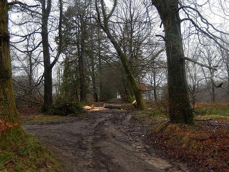Wentwood Forest Walk