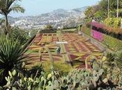 Xerophytes Madeira Botanical Garden