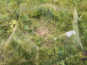 An open-top chamber surrounding one experimental plot. These increased the temperature at the soil by an average of 1.3 ˚C.