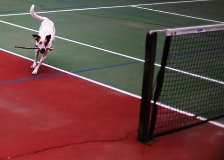 stanley loves tennis