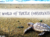 World Turtle Conservation