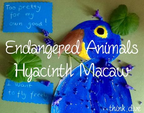 Hyacinth Macaw – Art and Science