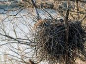 Potomac River Eagles Nest