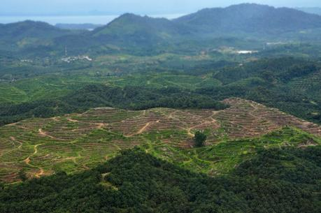 Palming off the forests: implications of introducing oil palm plantations in North-east India