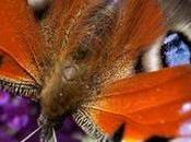Butterfly Species Decline 'dramatically' Germany Global Ideas DW.COM 30.03.2016