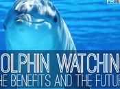 Dolphin Watching: Benefits Future