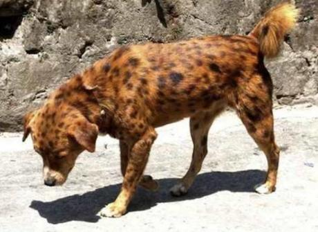 Top 10 Of The Worlds Rarest Breeds Of Dogs