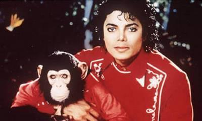 92110,xcitefun-michael-jackson-bubble-the-chimp