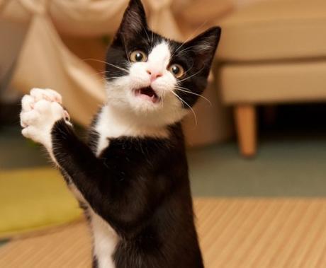 Cat Drops Jaw In Disbelief