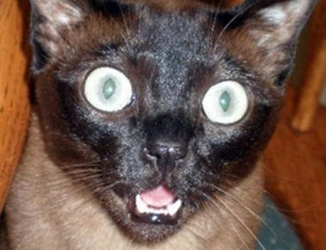 Top 10 Shocked and Jaw Dropped Cats