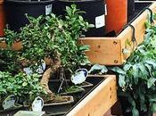 Heartfelt Appology Local Garden Centre