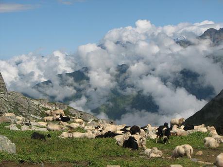 Gaddi Culture of Himachal Pradesh