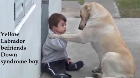Labrador with Down syndrome boy