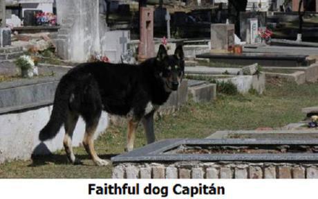 dog visits owner's grave