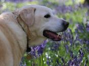 Wordless Wednesday Carpets Bluebells with Faithful Friend