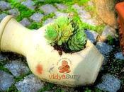 Xeriscaping Mindful Gardening