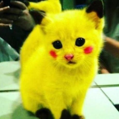 Pokémon: Cat Cosplay