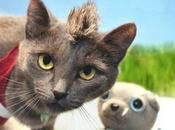 Winning Costume Videogame Cosplay Cats