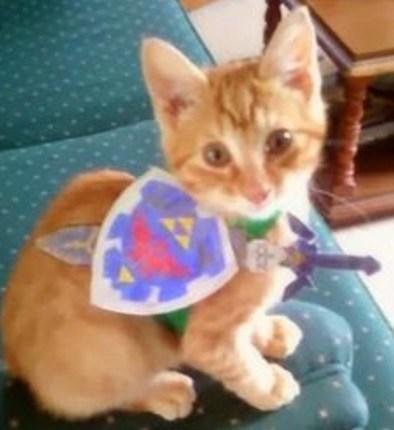 Legend of Zelda: Cat Cosplay