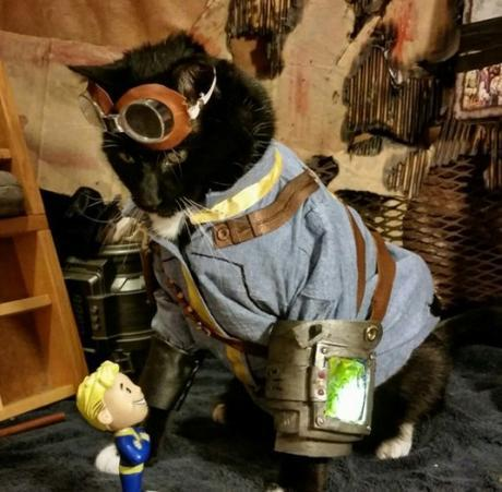 Fallout 3: Cat Cosplay