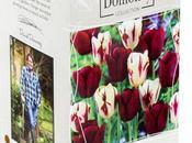 Tulip Conundrum