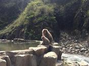 Travel: Snow Monkeys Yudanaka, Japan