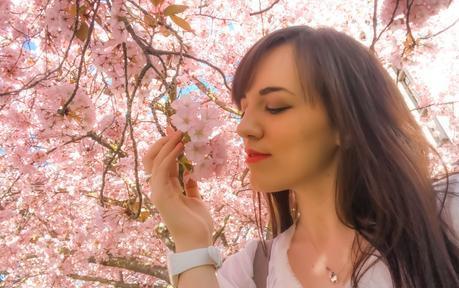 cherry_blossoms_spring_university_washington_trendy_techie_10_edited
