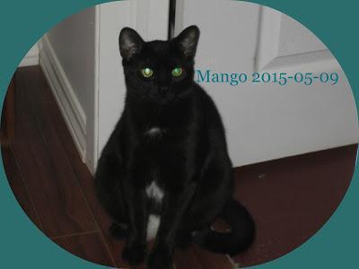 #Adoptable #pets: Meet #cats Riley & Mango looking forever home Pembroke, Ontario