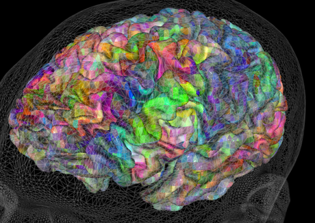 Semantic maps in our brains - and some  interactive graphics