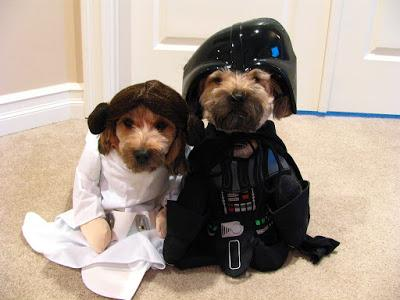#Photo: May the Fourth be with you #dog #MayTheFourthBeWithYou