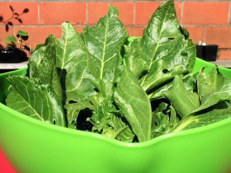 Fresh chard & fresh coriander leaves from our garden , made into a lovely wok dinner!